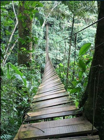 Al menos 10 muertos por la caída de un puente colgante en una reserva natural en Colombia