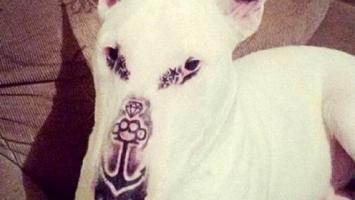 Le tatuó la cara a su perro, subió una foto a Facebook y lo amenazaron