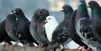 ¿Las palomas pueden aprender a leer?