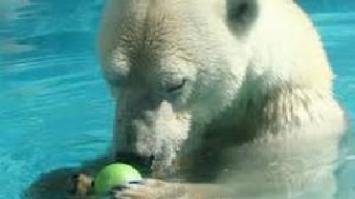 Exigen el cierre del zoo tras la muerte del oso polar