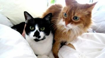 Mirá la mansión que hizo para sus gatos en 15 años