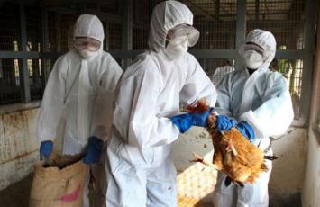 Alerta a turistas que van a Chile, por un brote de gripe aviar