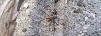 """Un niño se encuentra grave tras ser """"picado"""" por una araña"""
