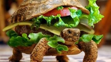 Un hombre intentó viajar en avión con su mascota escondida en un sandwich