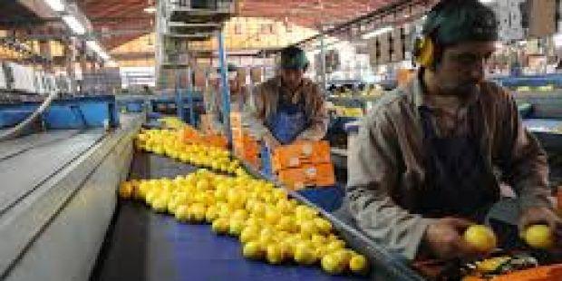 Trump suspendió por 60 días la importación de limones argentinos