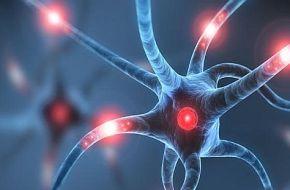 Las neuronas ayudarían al desarrollo del cáncer en el cuerpo
