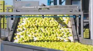 EEUU autorizó ingreso de limones argentinos de manera definitiva