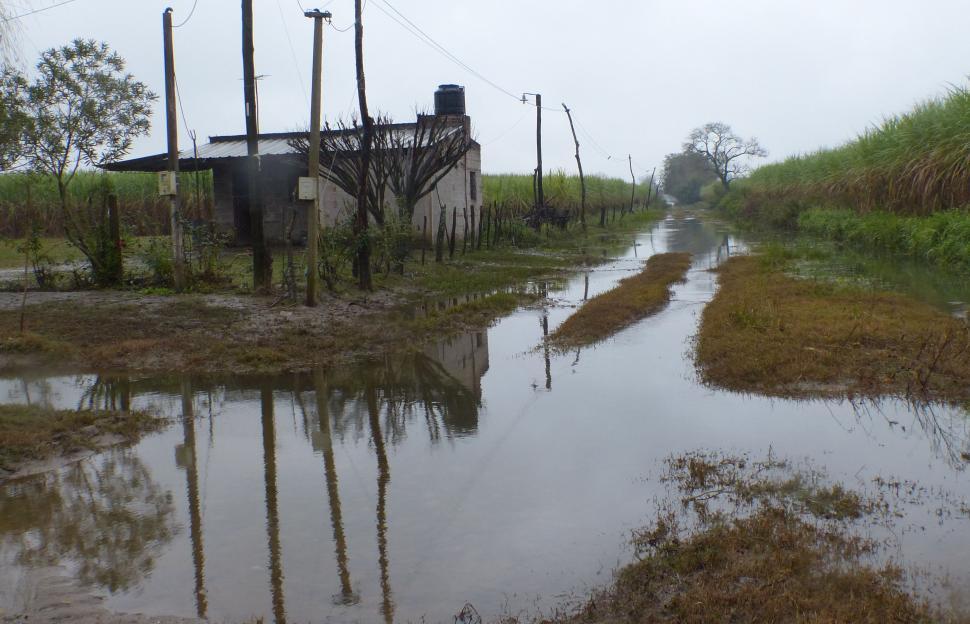 Todos los cultivos tucumanos fueron perjudicados por las lluvias e inundaciones
