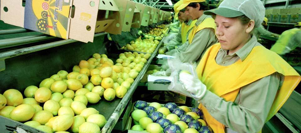 Más problemas para que los limones ingresen a EEUU
