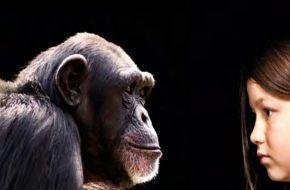 Tamaño del cerebro de primates estuvo determinado por la dieta