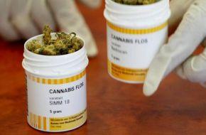 Finalmente se reglamentó la ley de Cannabis Medicinal