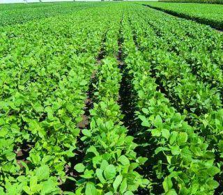 La rentabilidad de la soja cayó 40% en un año y ya está en los niveles más bajos de la última década