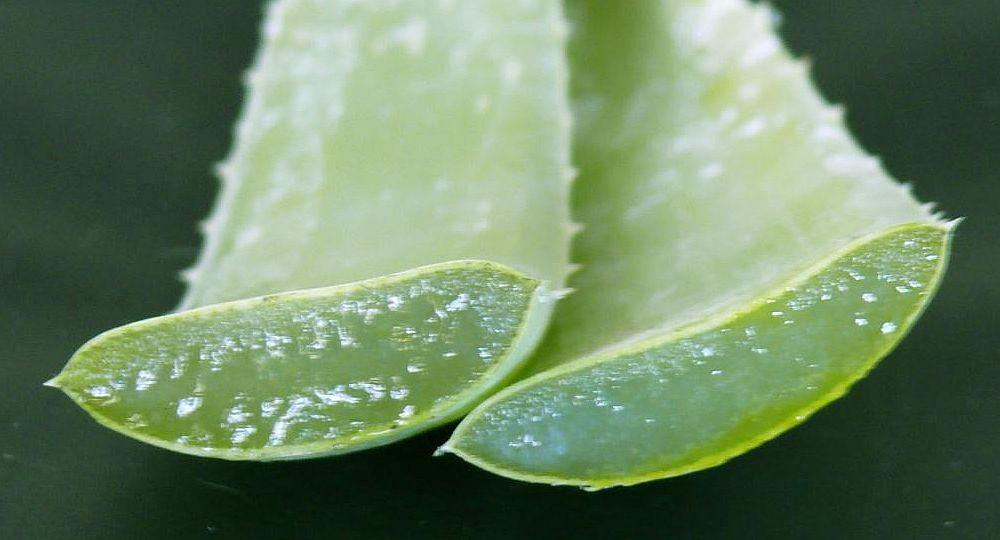 Aloe vera, la planta que es aliada de la piel