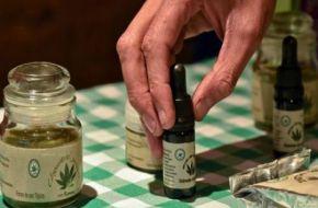 El Senado podría convertir en ley el uso medicinal de la marihuana