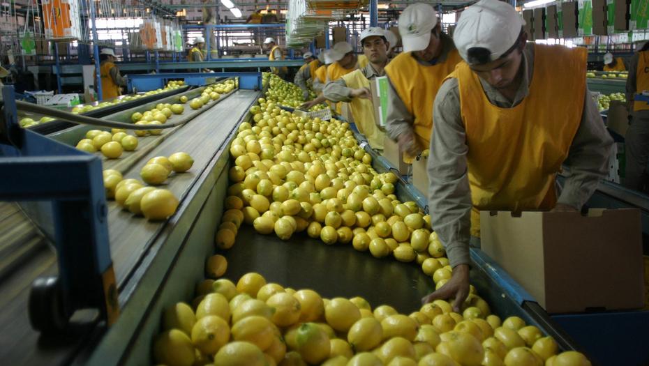 Estados Unidos prolongó la suspensión de limones tucumanos