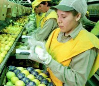 Estados Unidos confirmó que levantará las restricciones para los limones argentinos